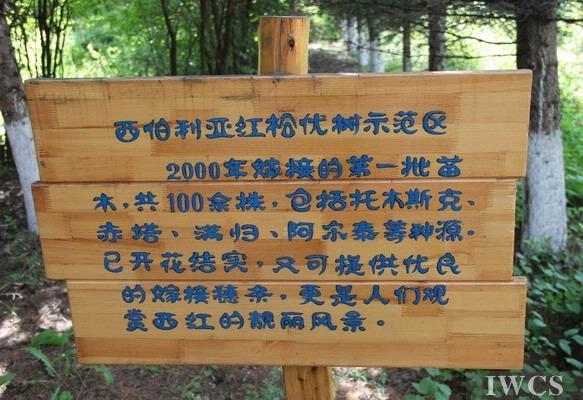 大兴安岭上的绿色摇篮——记阿里河森林经营处中心苗圃
