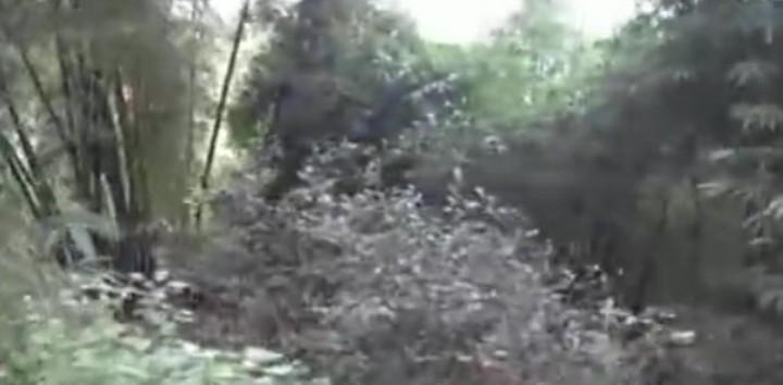 森林文化之旅——古茶树林(1)