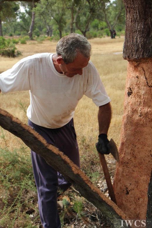 软木的诞生